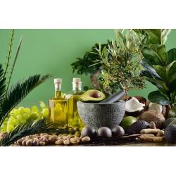 Aloe-Vera-Öl Mazerat