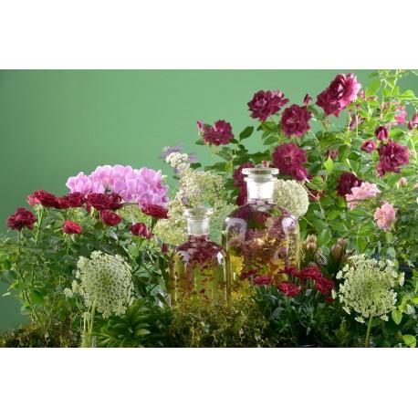 Parfumöl naturidentisch (Wild)Rose