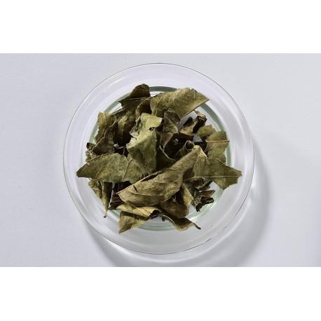 Erva de Bugre - (Caseria sylvestris)