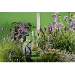 Geraniumwasser kbA (Pelargonium odorit.)