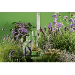 Immortellenwasser/Strohblume kbA (Helichrysum italicum)