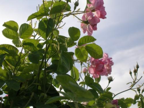 Einführung in die Welt der Naturkosmektik zum Selbermachen!
